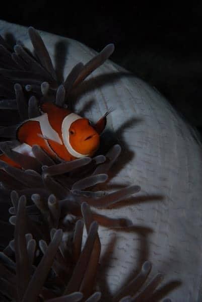 Tauchpreise, Scuba diving rates, Scuba Diving Philippines, Tauchen Philippinen, Tauchplätze Philippinen